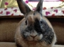 Memorial Jack Rabbit