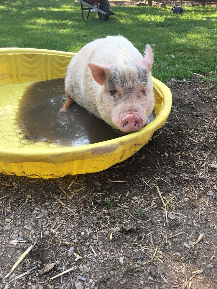 Zoey-in-her-pink-swimming-pool-2018