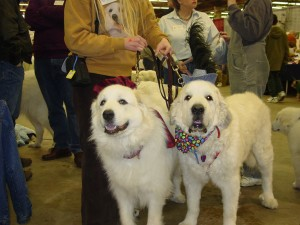 brutus-fighting-cancer-with-a-friends-support-kayla-canine-learning-expo